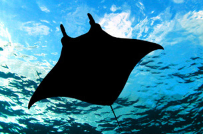 Manta ray night snorkel from kona in hawaii 46779