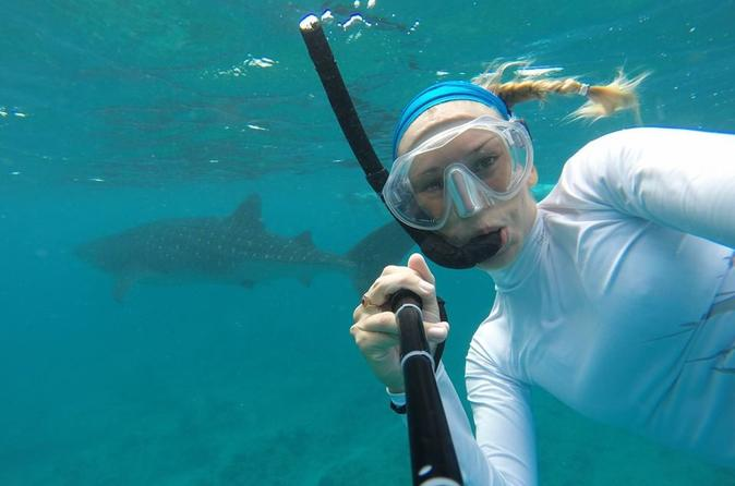 Snorkeling With Whale Sharks From Cancun And Riviera Maya