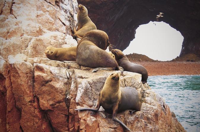 Excursão de dia inteiro pelas Ilhas Ballestas e pela Reserva Nacional de Paracas partindo de Paracas