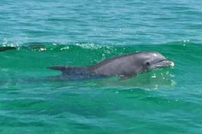 Dolphin-Watching Cruise in the Gulf of Mexico