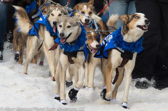 2018 Iditarod Race Start