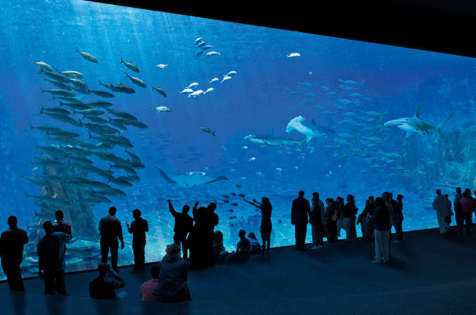 Entrance Ticket To The NAUSICAA, The Biggest Aquarium In Europe - Lille
