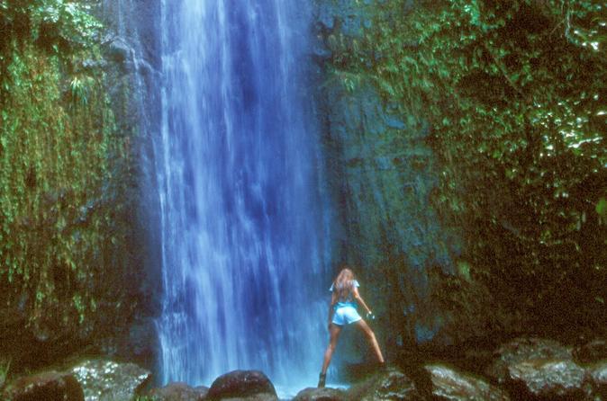 Manoa Waterfall Small Group Adventure