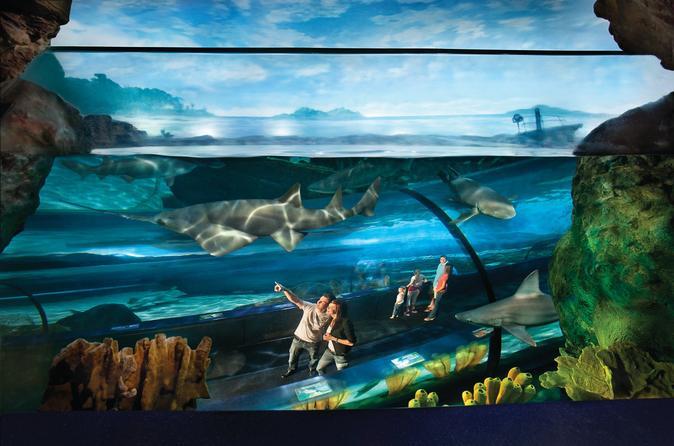 Ripley 39 S Aquarium Myrtle Beach Admission 2017