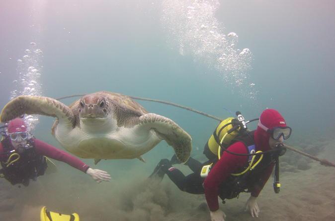 Scuba diving beginner s session in costa adeje in costa adeje 316186
