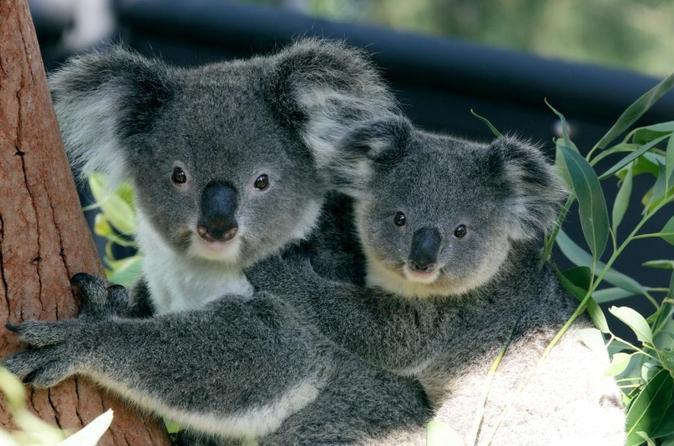 Cruzeiro em Sydney Harbour com ingresso de entrada para o Taronga Zoo