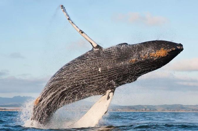 Whale Watching at the Golden Gate on Sept 22