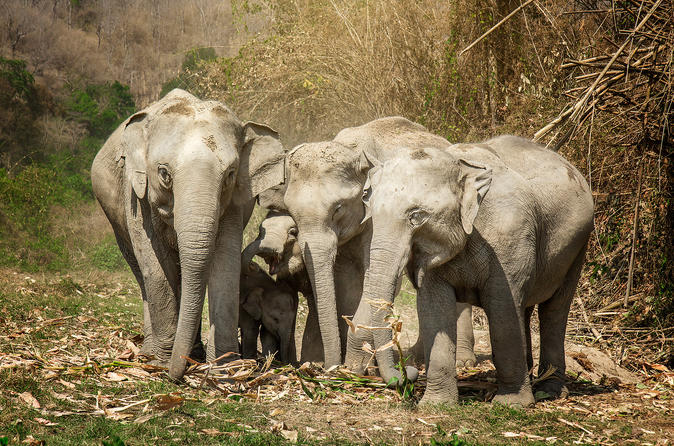 Half day morning visit to elephant jungle sanctuary in chiang mai in chiang mai 426074