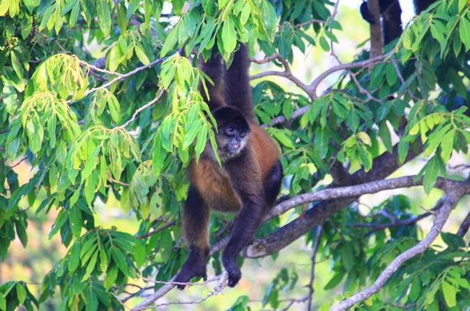 Small-Group El Chocoyero El Brujo Nature Reserve Tour from Managua