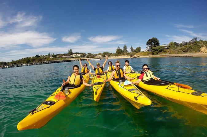Mornington peninsula kayak coastline tour of dolphin sanctuary in mornington 318778