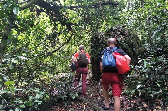Dschungeltour und Entdeckung der Tierwelt