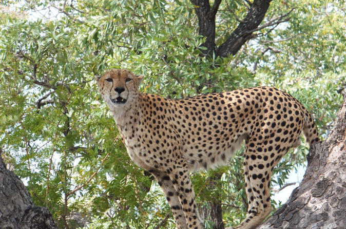 3 day kruger park safari from johannesburg or pretoria in johannesburg 330831