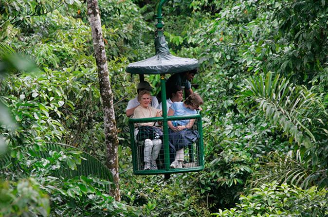 RAINFOREST ADVENTURE - 3 IN 1 -
