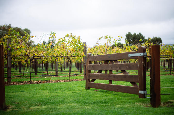 Jacobs creek vineyard tour wine tasting and 2 course lunch in rowland flat 325693