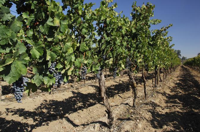 Viagem diurna às vinícolas Cousino Macul e Concha y Toro saindo de Santiago