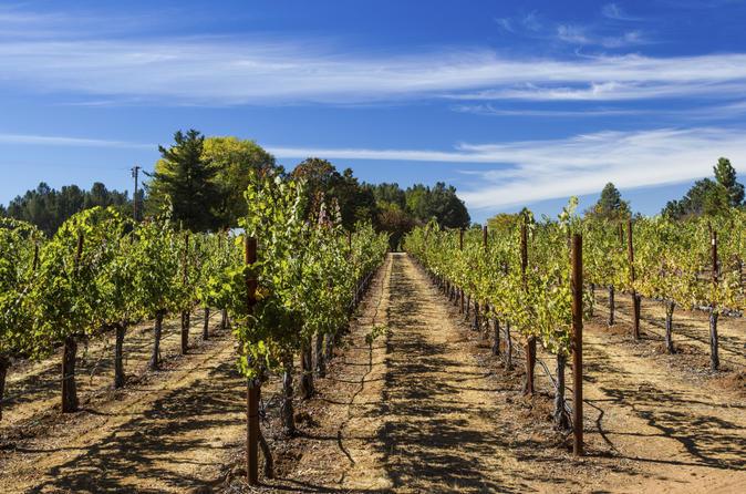 Small Group Muir Woods and Sonoma Wine Tour plus Sausalito