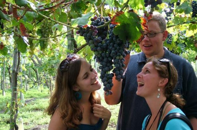 Wine tasting on the slopes of vesuvius including lunch in pompei 365702