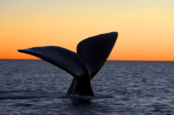 Excursion To Peninsula Valdes Reserve With Whale Watching Boat Navigation - Puerto Madryn