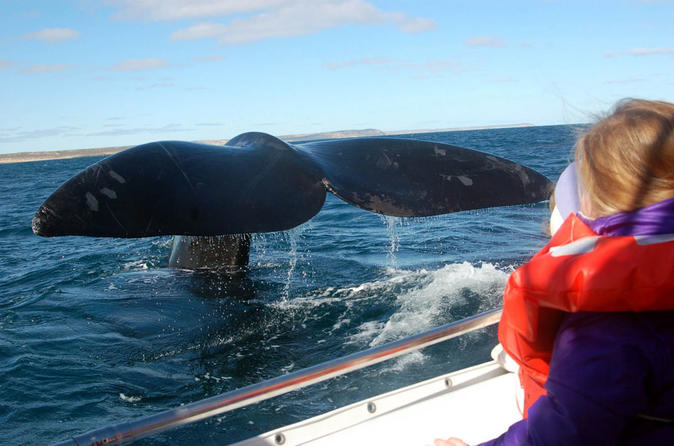 Whale Watching Boat Navigation In Peninsula Valdes - Puerto Madryn