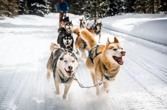 White Adventure In Ushuaia With Sled Dogs