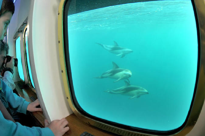 Yellow Submarine: The Whale Watching Boat Navigation In Peninsula Valdes - Puerto Madryn