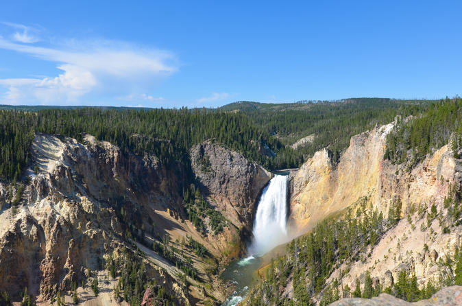 Yellowstone lower loop nature and wildlife guided tour in cody 333896