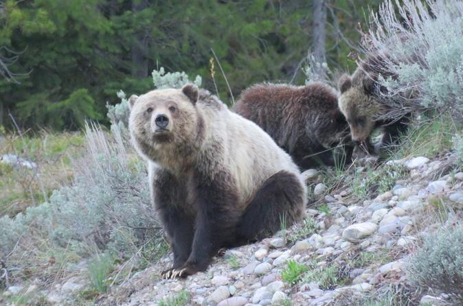 Grand Teton National Park Full-Day Guided Tour