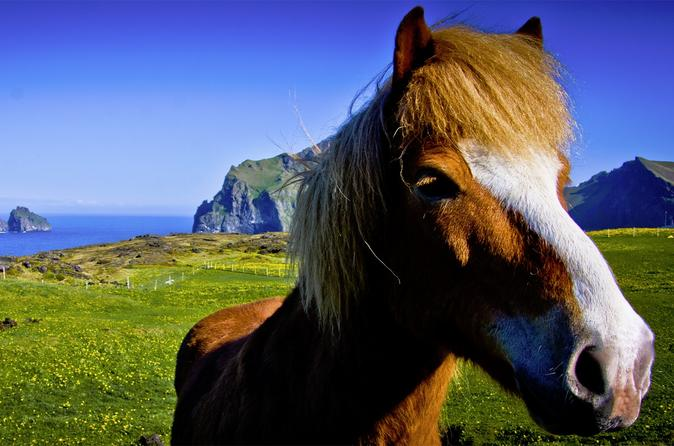Private Golden Circle and Horse Riding Tour from Reykjavik