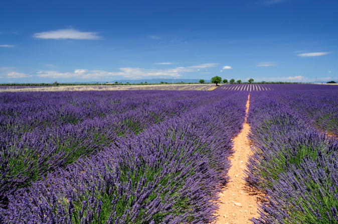 Marseille Shore Excursion: Private Aix-en-Provence and Valensole Lavender Tour
