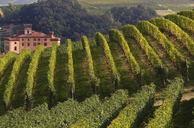 Private tour piedmont wine tasting of the barolo region in turin 137698