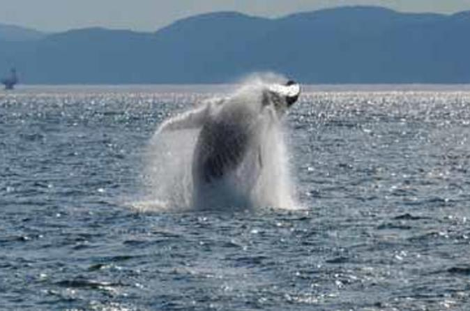 Rivi re du loup day trip and whale watching cruise from montreal in montreal 48531