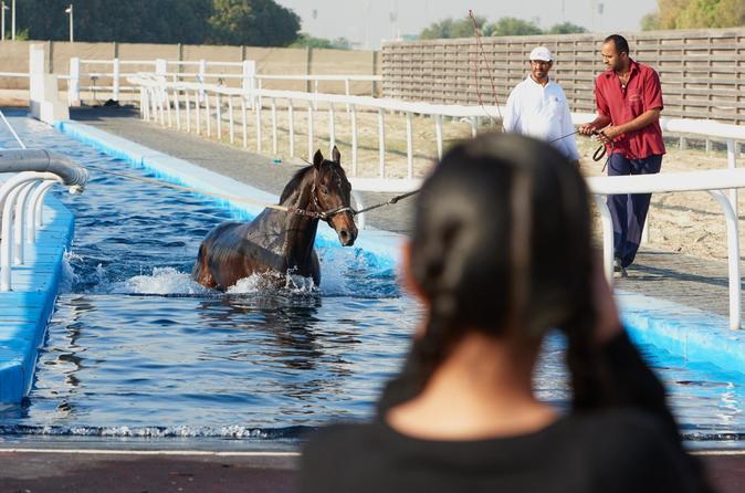 Racehorse Stable Tour With Breakfast At Meydan Racecourse - Dubai