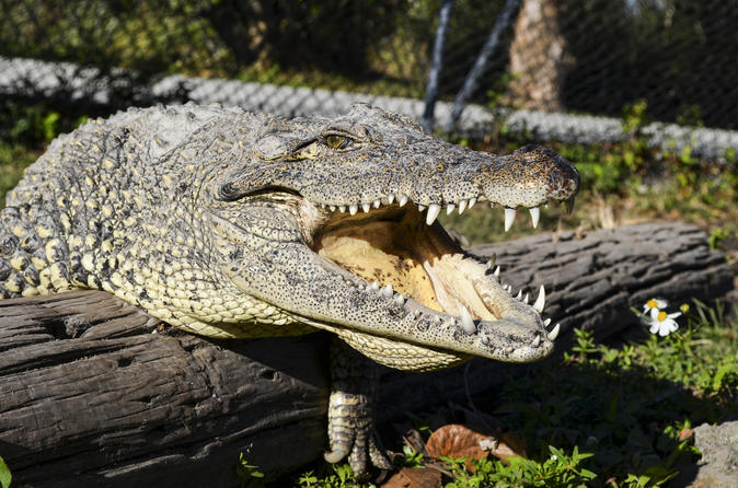 Half-Day Florida Everglades Guided Airboat Tour from Miami