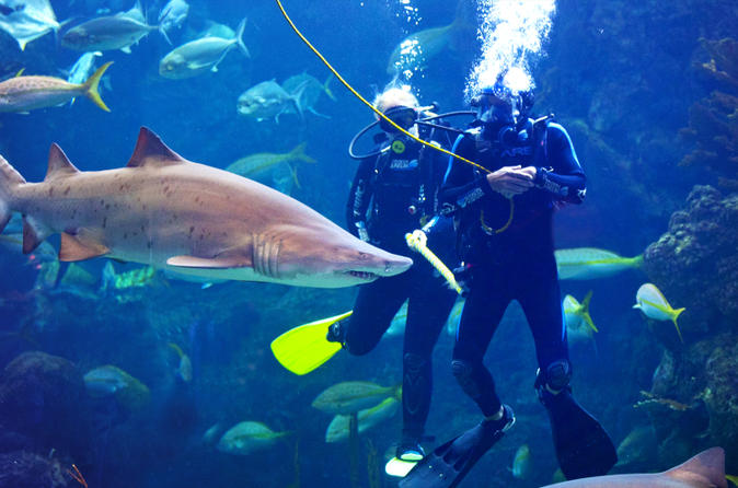 Dive with the sharks at the florida aquarium in tampa bay in tampa 163953