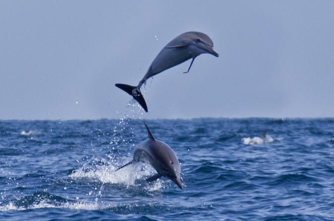 Dolphin Watching Cruise from Muscat