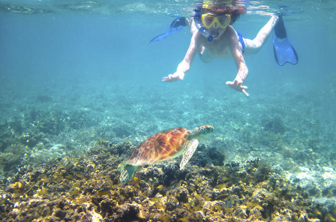 Turtle reef kayak tour in maui 167328