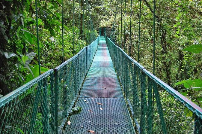 Full-Day Monteverde Tour with Hanging Bridges and Reptiles