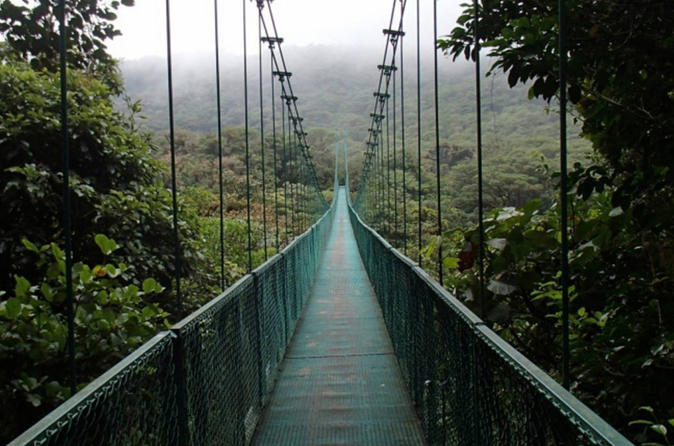 Full day to Monteverde from San Jose with Canopy and Reptil Amphibians watching