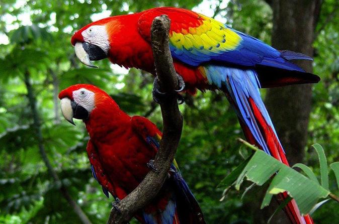 Kayak Tour, Canopy and visit the Wildlife Reserve in Puntarenas from San José