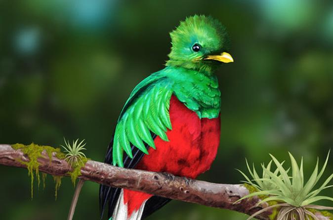 Quetzales scarlet macaws and birds watching tour in San Gerardo de dota San Jose
