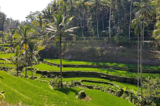 Full day private ubud highlights tour in ubud 332075
