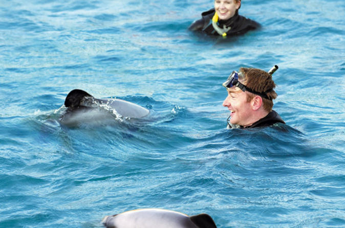 Swimming with dolphins in akaroa in akaroa 139424