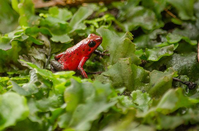 Selvatura park herpetarium tour in monteverde in monteverde 340779