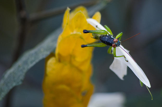Selvatura park insect exhibition in monteverde in monteverde 340319