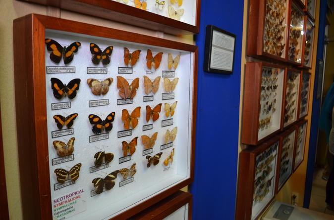 Selvatura park nature tour in monteverde in monteverde 341455