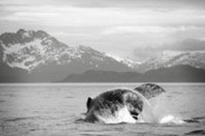 Juneau whale watching adventure and mendenhall glacier tour in juneau 39001