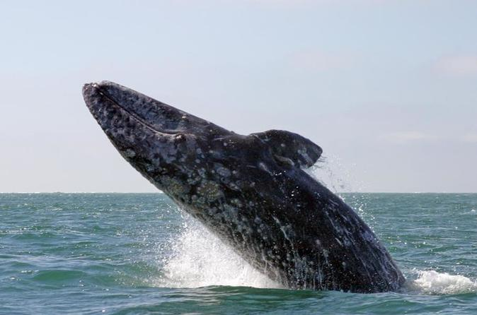 Nature Cruise and Whale Watching Tour