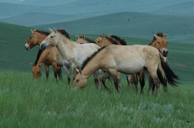 Day tour of hustai national park in ulaanbaatar 345259