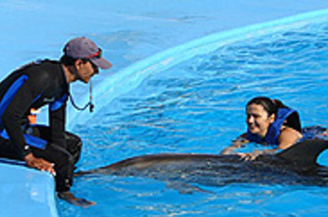 Dolphin trainer for a day in cabo san lucas in los cabos 33026