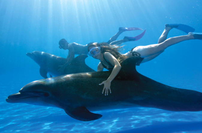 Swim with the Dolphins in Cabo San Lucas